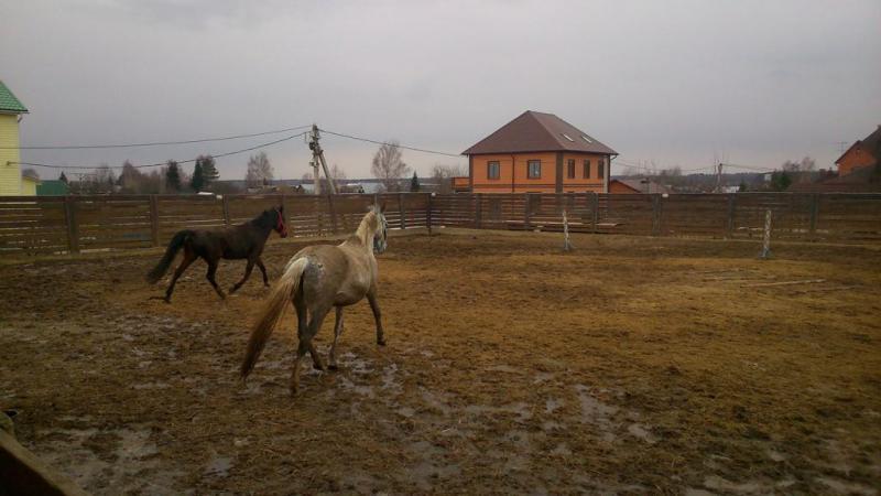 """КСК """"Игнатовские конюшни"""""""