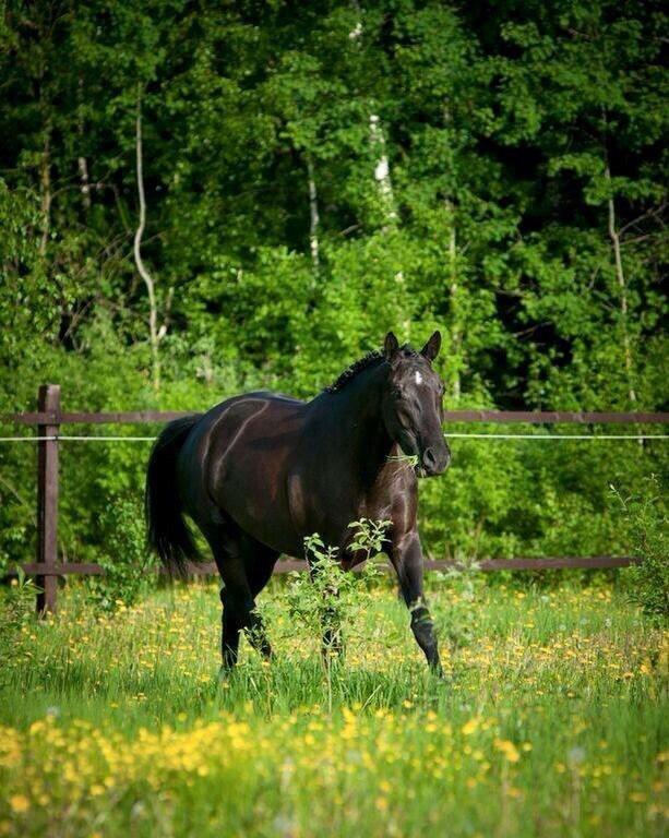 Частная конюшня в Малоярославце (ЭквиТерра)
