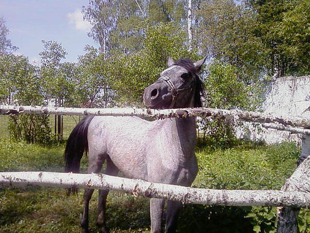 Частная конюшня в Кузьмищево