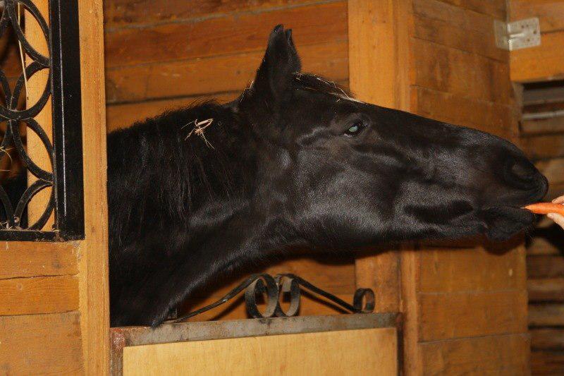 "КК ""Horse Paradise"""