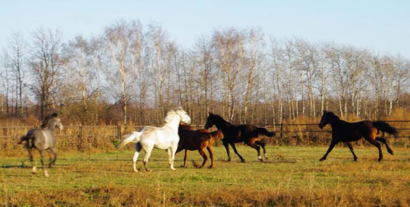 """КК """"Дикая лошадь"""""""
