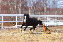 "КСК ""Толстая лошадь"""
