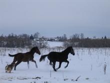 Частное хозяйство в Путятино